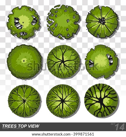 Tree plan stock images royalty free images vectors for Top view design
