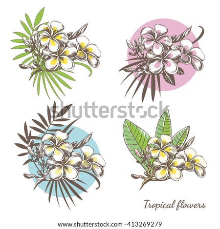 Set of tropical floral elements for your design. Hand drawn exotic tropical flowers. Frangipani (Plumeria) sketch with palm leaves. Composition with exotic plants. - stock vector