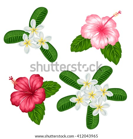 Set of tropical flowers hibiscus and plumeria. Objects for decoration holiday invitations, greeting cards, posters.