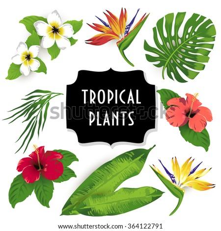 Set of tropical flowers.Vector. - stock vector