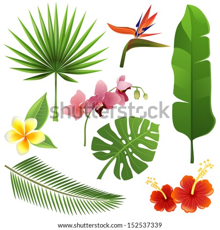 Set of tropical leaves and flowers - stock vector
