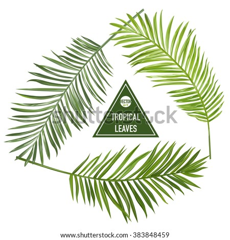 Set of Tropical Palm Leaves - for design elements, scrapbooking - in vector - stock vector
