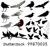 Set of 24 (twenty four) birds and silhouettes of birds - stock vector