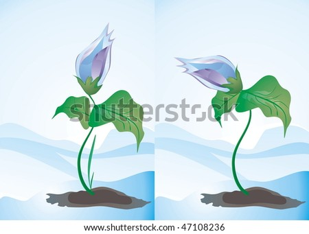 set of two spring flowers, cute vector editable illustration           - stock vector