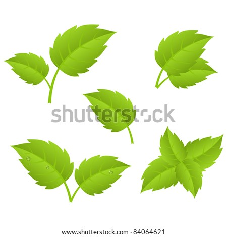 Set of various green leaves. Vector illustration, isolated on a white.
