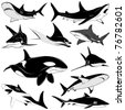 Set of various sharks, tattoo - stock vector