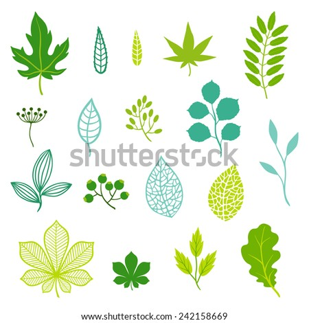 Set of various stylized green leaves and elements. - stock vector