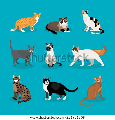 Set of vector cats depicting different breeds and fur color standing  sitting and walking on a blue background - stock vector
