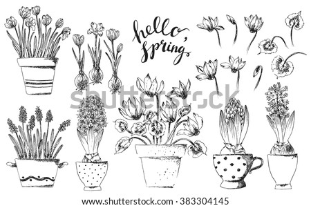 Set of vector hand drawn line art bulb pot flowers and hello spring lettering. Spring hyacinth, grape hyacinth, crocus, cyclamen ink drawings for Easter decor, garden backgrounds, floral design. - stock vector