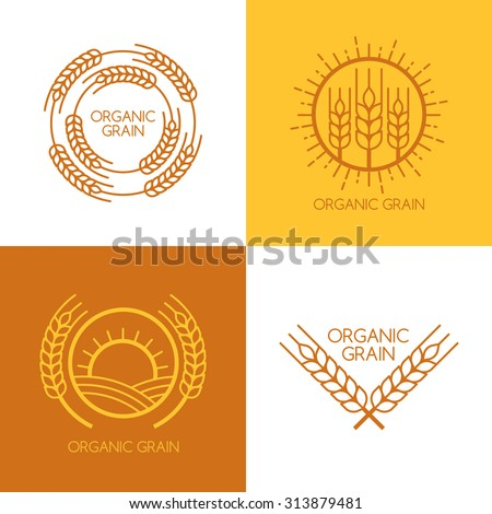 Set of vector linear wheat, fields logo design template. Abstract concept for organic products, harvest, grain, bakery, healthy food. - stock vector