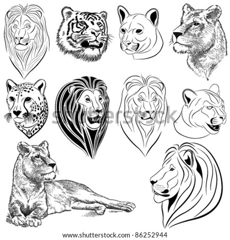 Set of vector lions, tigers, pumas, cheetahs - stock vector