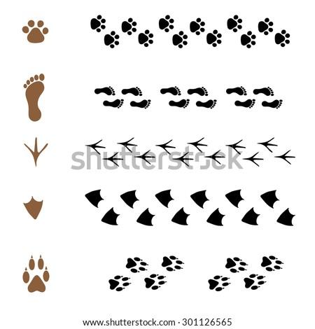 set of vector pattern brushes in the form of animal tracks - stock vector