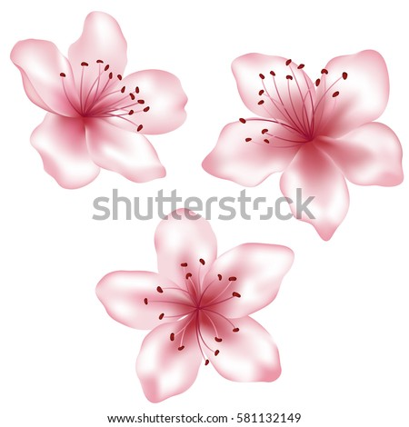 Set of vector pink flowers illustration, isolated on white background. Spring blossom element for card design needs. Peach blooming, apricot bloom, sakura flower or cherry blossom. Vector icon set.