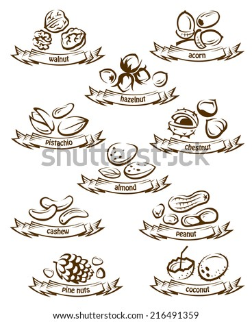 set of vector various nuts - stock vector