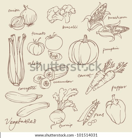 Set of Vegetables doodles vector - stock vector