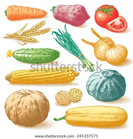 Set of vegetables, fruits and plants hand drawn colour vector illustration - stock vector