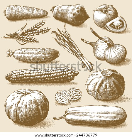 Set of vegetables, fruits and plants hand drawn vector illustration - stock vector