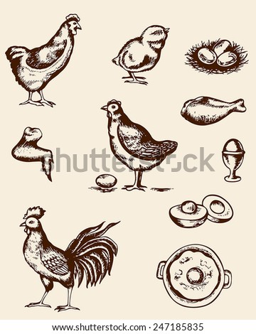 Set of vintage hand deawn chickens and eggs - stock vector