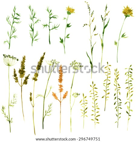 Set of watercolor drawing wild flowers, herbs and twigs, painted  field plants, color floral elements, hand drawn vector illustration - stock vector