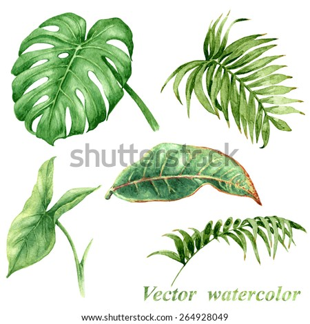 Set of watercolor tropical plants  leaves.  - stock vector