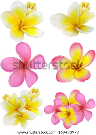 set of yellow and pink plumerias , may be used for a Woman's Day congratulation  card - stock vector