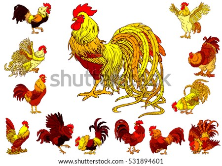Set of yellow, orange and red rooster with different characters isolated on white. Fiery chicken symbol of the Chinese new year 2017. Vector illustration.