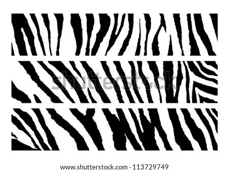 set of Zebra pattern vector - stock vector