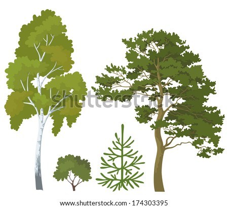 Set plants: birch, pine, fir tree and bush isolated on white background. Vector - stock vector