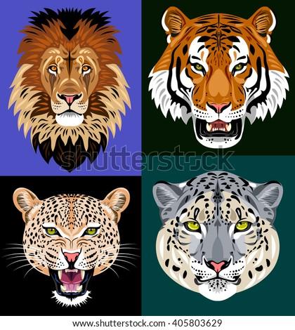 Set portraits wild predators - lion, tiger, leopard, snow leopard - stock vector