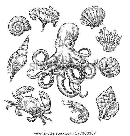 set sea shell coral crab shrimp stock vector 577308367