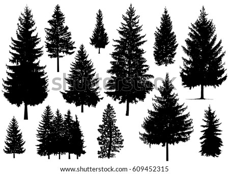 Pine Tree Stock Images, Royalty-Free Images & Vectors | Shutterstock
