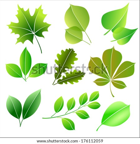 Set silhouettes of different green leaves for a fresh spring or summer design