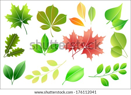 Set silhouettes of different leaves for seasonal design