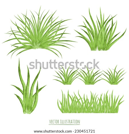 Set watercolor green grass isolated on white background - stock vector