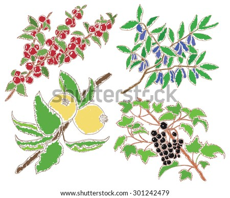 Set with hand drawn apples and berries of black currant, cherry and honeysuckle - stock vector