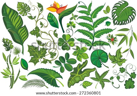 Setr of Tropical Leaves  - stock vector