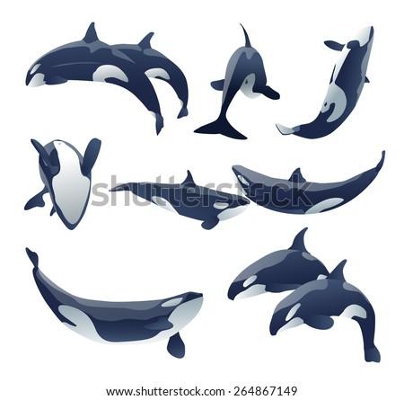 shamu killer whale show vector set illustration - stock vector