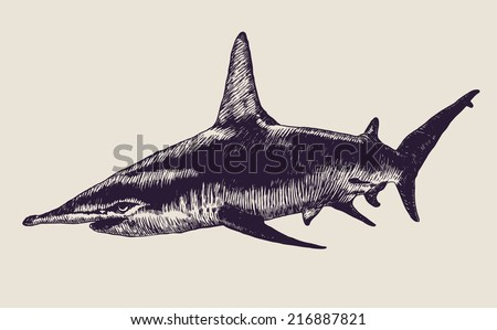 shark. engraving style. vector illustration. - stock vector