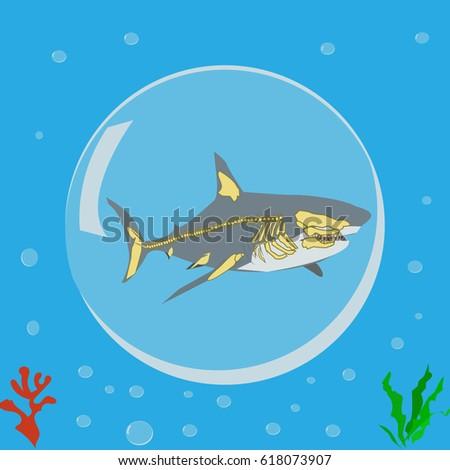 Shark Icon Logo Symbol Skeleton Anatomy Stock Vector 618073907 ...