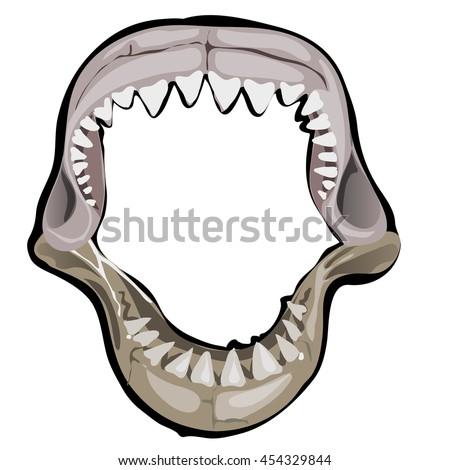 shark jaw isolated on white background ��������������������