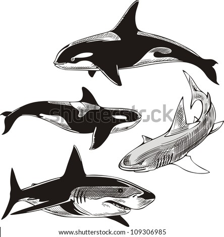 Sharks and killer whales. Set of black and white vector illustrations. - stock vector