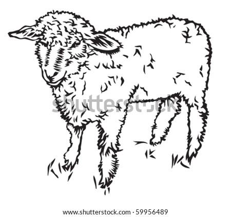 sheep - stock vector