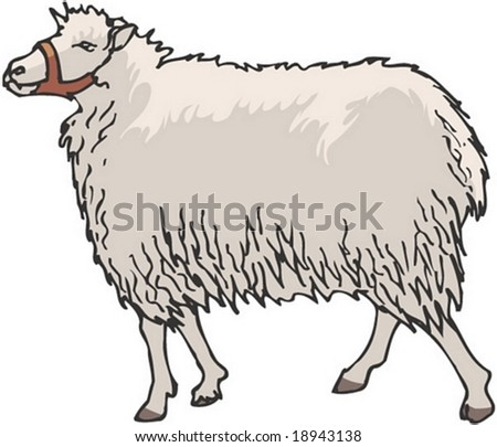 Sheep Character on white background