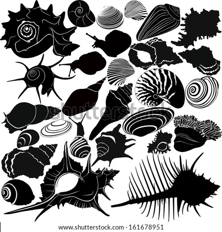 shell of a snail  - stock vector