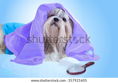 Shih tzu dog after washing with bathrobe, towels and comb - stock vector
