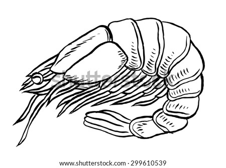 Shrimp or prawn isolated vector illustration