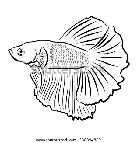 Siamese fish, illustration siamese fish isolated