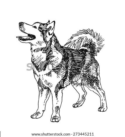 siberian husky Dog. hand drawn. Vector illustration - stock vector