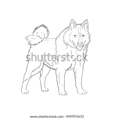 Siberian Husky Factory Specialized Breed Northern Sled Dog Favorite Pets Friend Of