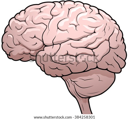 Side View drawing of a human brain - stock vector
